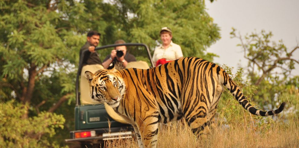 3nights chitwan tour