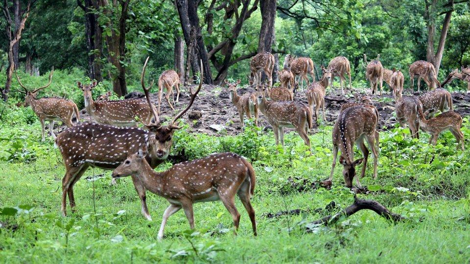 Chital Bardia National Park