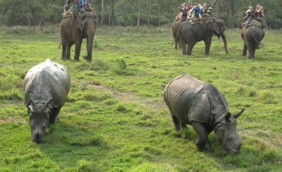 Chitwan Jungle Safari in Nepal