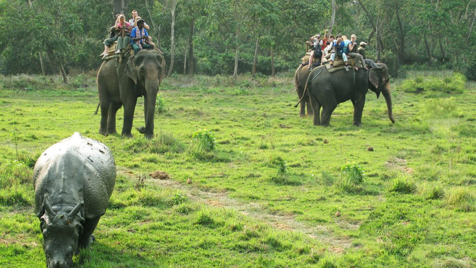Wildlife Tour in nepal