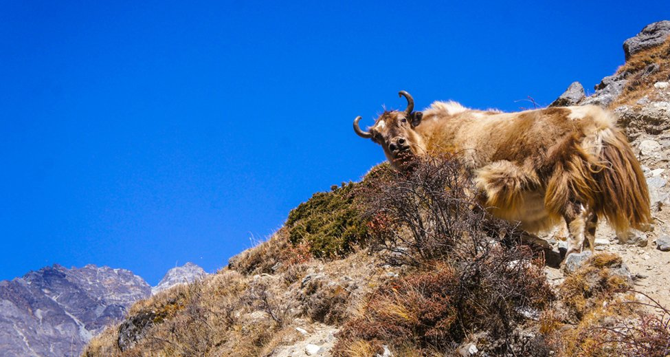 flora and fauna of everest base camp