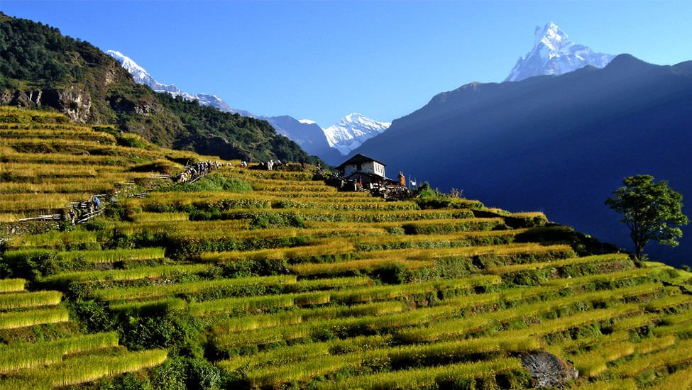 Annapurna Massif Views